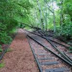 Was blüht denn da im Gleisbett? Ein Spaziergang im Natur-Park Südgelände