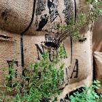 Gärtnern im Kaffeesack