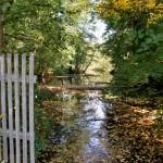 Wilde Briese: Biberdamm und Schwanensee