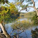 Herbstspaziergang am Liepnitzsee