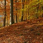 Buchenwald Grumsin: Von alten Bäumen und ehrlichen Findern