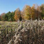 Spandauer Eiskeller: Wiesen, Wald und Grenzgeschichten