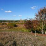 Im Land der wilden Orchideen: Lange Dammwiesen